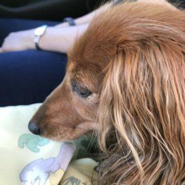Hundeleine gestrickt und gefilzt